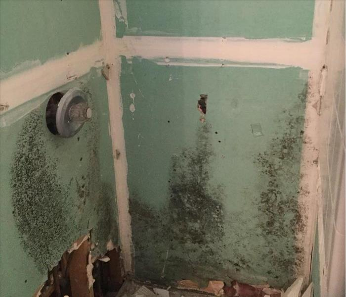 Mold Growth Found in Shower in San Antonio, Texas Before